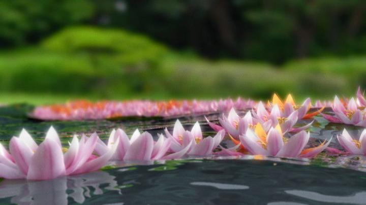 Seerosen auf Wasser